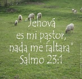 SALMO231